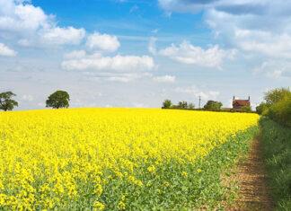 Jak zapewnić najlepesze ubezpieczenie rolne dla swojego gospodarstwa